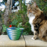 My beautiful white-chested tortoiseshell pusscat, sitting regally on a wall in our garden with Jane's Fab 40 green, black and white telephone-wire basket.