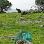 Wire basket on rocks on the grassy hill above Stokes Bay, Kangaroo Island, with a kangaroo in the background.