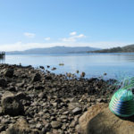 Telephone wire basket on the rocky beach at Lunnawunna, Bruny Island, Tasmania, with the jetty in the background.