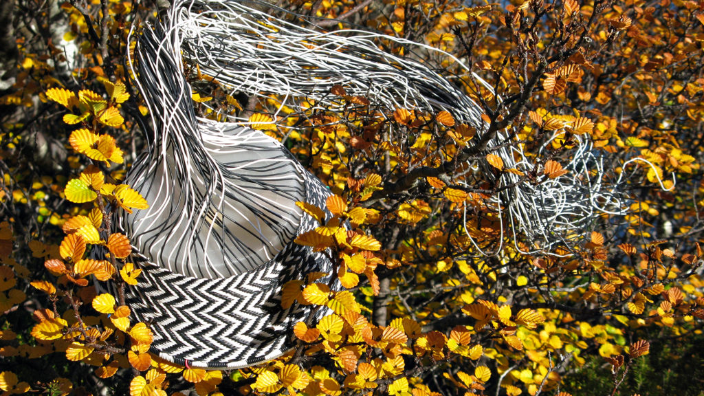 Black and white chevron wire basket in progress, nestled amongst the golden orange autumn foliage of Tasmania's deciduous beech.