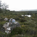 Sally's basket on a lichen-covered boulder amidst alpine scrub near Mt Field East, with a small tarn in the background.