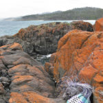 Sally's basket on coastal rocks covered in bright orange lichen, with the ocean and coastline in the background.