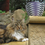 My handsome tortoishell and white cat, sitting on a wall in sphinx pose, with Sally's completed basket behind him.