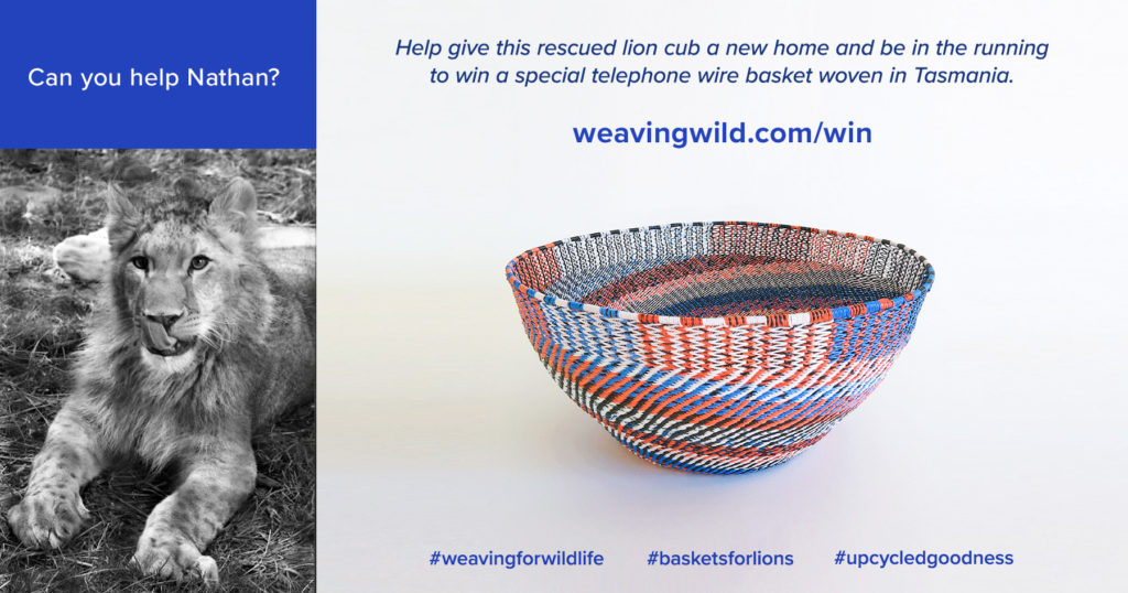 Help give this rescued lion cub a new home and be in the runningto win a special telephone wire basket woven in Tasmania.
